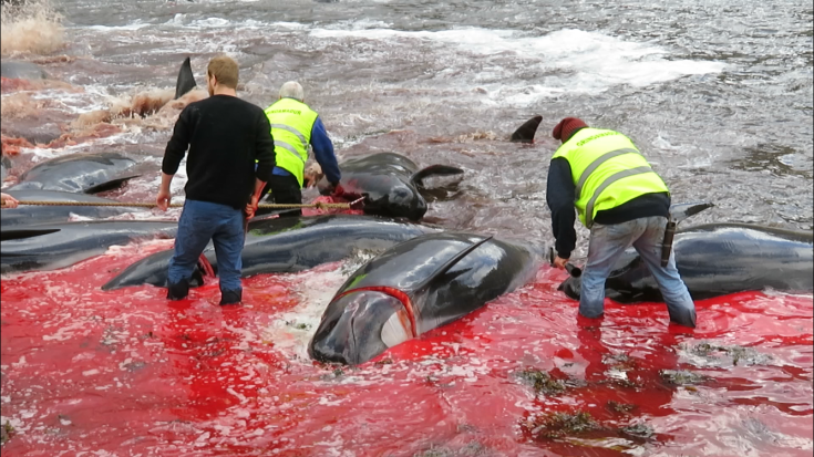 Whaling, Whale Hunting